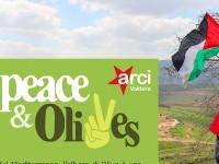 """""""PEACE&OLIVES"""": UN CONTRIBUTO PER LA PALESTINA, UN VIAGGIO NEL RICORDO DI PAOLO"""