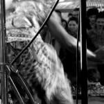 voglio vederti danzare - Rossella Bargellini